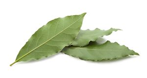 Three leaves of bay leaf. Isolated three leaves of bay leaf on the white background royalty free stock photography