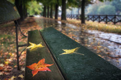 Three leaves on a bench in a park Stock Photo