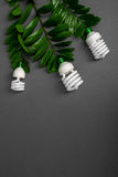 Three LED lamp with green leaf, ECO energy concept, close up. Light bulb on grey background. Saving  and Ecological Environment. C Royalty Free Stock Images