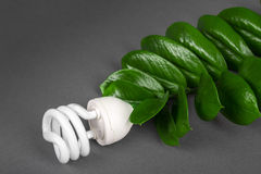 Three LED lamp with green leaf, ECO energy concept, close up. Light bulb on grey background. Saving  and Ecological Environment. C Stock Photos