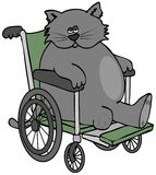 Three legged cat in a wheelchair Royalty Free Stock Images
