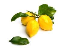 Three lemon on white Royalty Free Stock Photo
