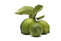 Three lemons on a branch. Lemosn on the branch with leaves Stock Image
