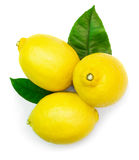 Three lemons with leaves Royalty Free Stock Photos