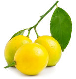 Three lemons on the white background isolated Royalty Free Stock Photo