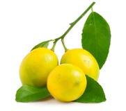 Three lemons on the white background isolated Stock Image