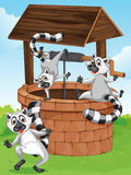 Three lemurs at the man-made well Stock Image