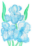 Three light blue irises, painting Stock Photography