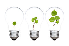 Three light bulbs with green plants inside Stock Photos