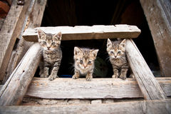 Three liitle kittens Stock Images