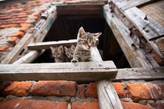 Three liitle kittens Stock Photography