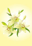 Three lily, vector grunge floral background Royalty Free Stock Photography