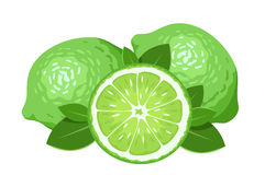 Three limes isolated on white. Royalty Free Stock Images