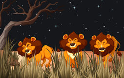Three lions in the field at night. Illustration Royalty Free Stock Images