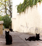 Three little cats Royalty Free Stock Photography