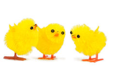 Three little chick brothers Royalty Free Stock Photo