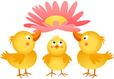 Three little chicks with flower Royalty Free Stock Photos