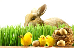 Three little chicks in the grass Royalty Free Stock Photos