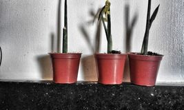 Three little decor plants royalty free stock photos