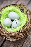 Three little eggs in bird nest Royalty Free Stock Photo