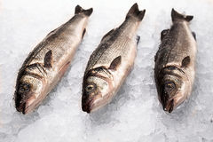 Three little fishes on ice Stock Photo