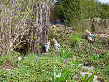 Three little garden gnomes around a tree trunk. Three little ceramic garden gnomes around a sawn off tree trunk standing among spring crocus alongside a scenic stock image