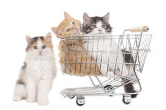 Three little kitten in a shopping baket Royalty Free Stock Photo