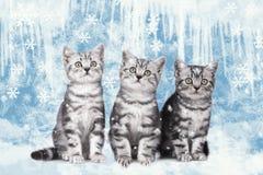 Three little kitten sitting on an ice landscape Royalty Free Stock Photography