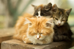 Three little kitten in the village Stock Photography