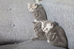 Three little kittens Royalty Free Stock Photography