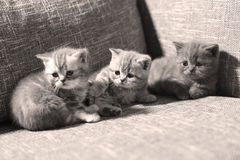 Three little kittens Stock Photography