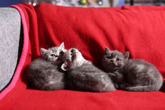 Three little kittens Stock Photo
