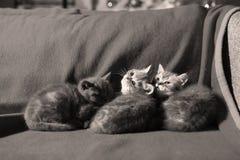 Three little kittens Royalty Free Stock Photo