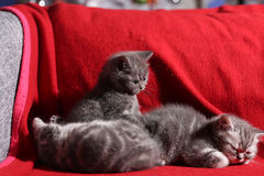 Three little kittens Stock Photos