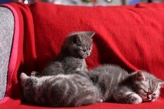 Three little kittens Stock Photos