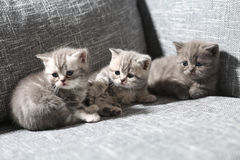Three little kittens Royalty Free Stock Photos
