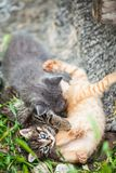 Three little kittens playing in a grass. Brown, gray, rad stock images