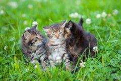 Three little kittens Stock Photography