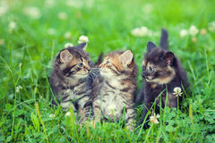 Three little kittens Stock Images