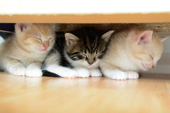 Three little kittens Royalty Free Stock Images