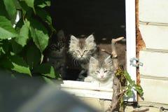 three little kittens stock image