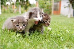 THREE LITTLE KITTIES Stock Photography