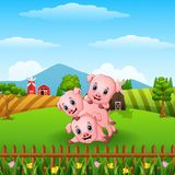Three little pig playing together Royalty Free Stock Photo