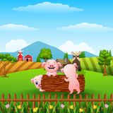 Three little pig playing together Stock Photo