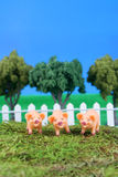 Three little pigs. On grass with fence, trees, and blue sky Stock Images