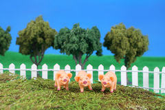 Three little pigs. On grass with fence, trees, and blue sky Stock Photos