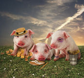 The three little pigs Stock Images