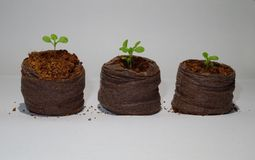 Three little sprouts in a natural flowerpots stock image