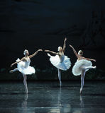 Three Little Swan Dance-The Swan Lakeside-ballet Swan Lake Stock Photography