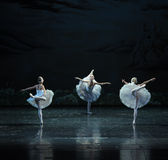 Three Little Swan Dance-The Swan Lakeside-ballet Swan Lake. In December 20, 2014, Russia's St Petersburg Ballet Theater in Jiangxi Nanchang performing ballet Stock Images